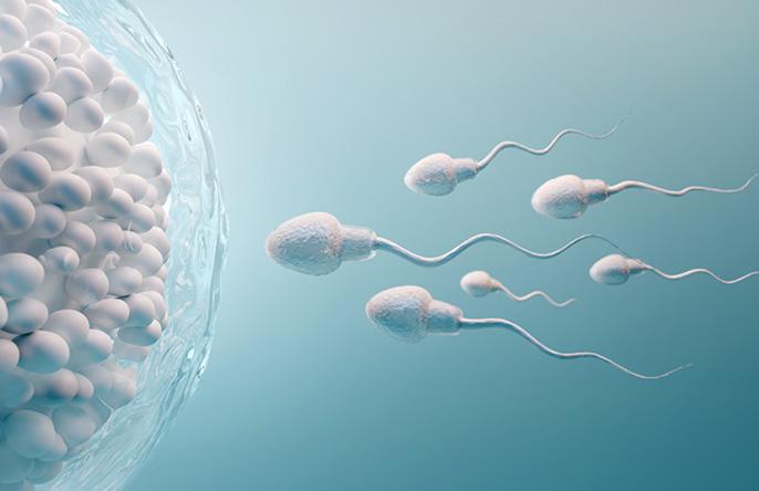 As principais causas de infertilidade masculina  | Mulher e Gestação